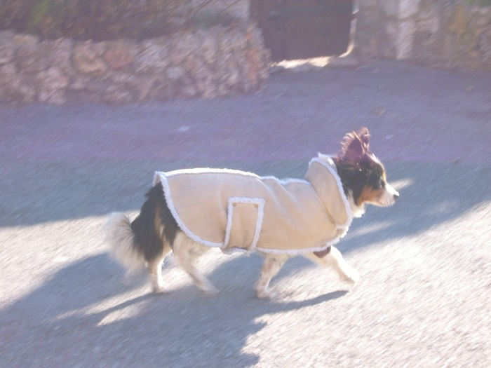 chien au manteau