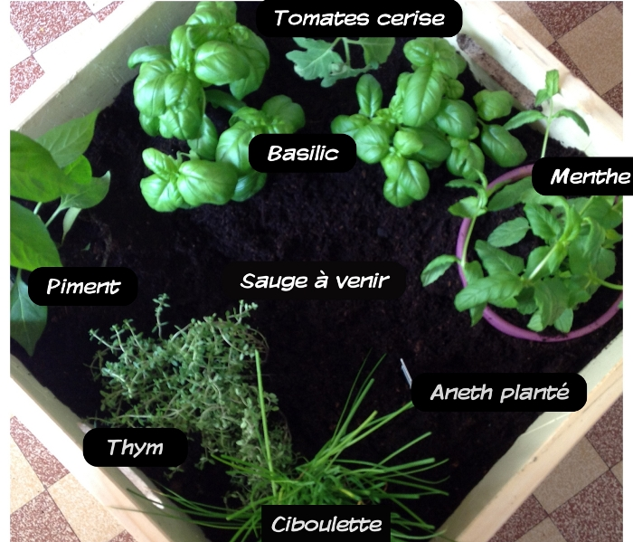 Douce mise en sc ne sweet home potager son balcon - Planter de la menthe en pot ...